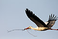 Storch mit Baumaterial